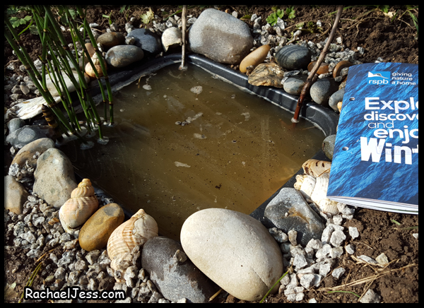 filling our mini pond