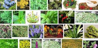 Şifalı bitkilerin faydaları nelerdir? Alternatif Tıp Haberleri Evinizden Eksik Etmemeniz Gereken Şifalı Bitkiler Şifalı Bitkiler Her Derde Deva En Faydalı Bitki Kullanım Tavsiyeleri Faydalı Bitkiler ve Yararları Sağlık Bitkilerin Faydaları Haberleri Son Dakika Güncel Bitkilerin Faydaları Şifalı Bitkiler Nelerdir? Bitkilerin Özellikleri