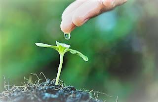Come fanno le piante a vedere toccare annusare e sentire