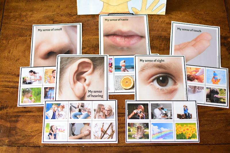 Human Body Preschool Mini Unit: MY 5 SENSES