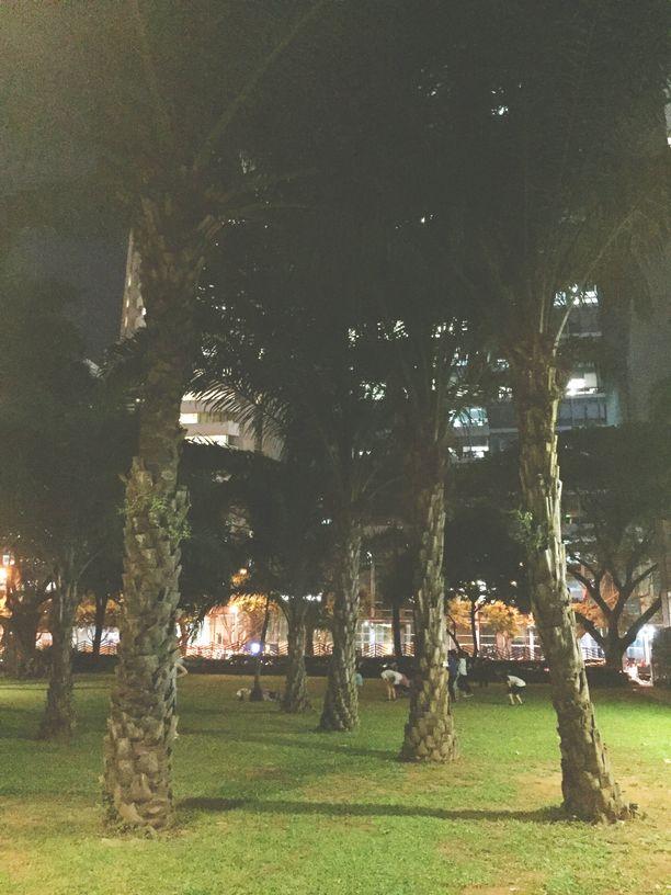 Trees inside Ayala Triangle Gardens
