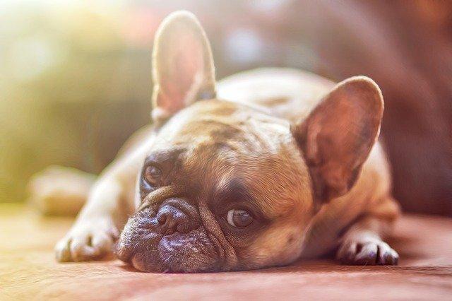 A Dog's Diet Influences Oral Health