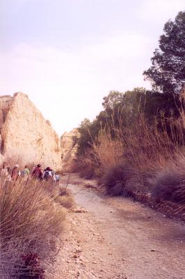 A veces el desierto se mezcla con vegetación que le da aspecto de oasis, río Chícamo
