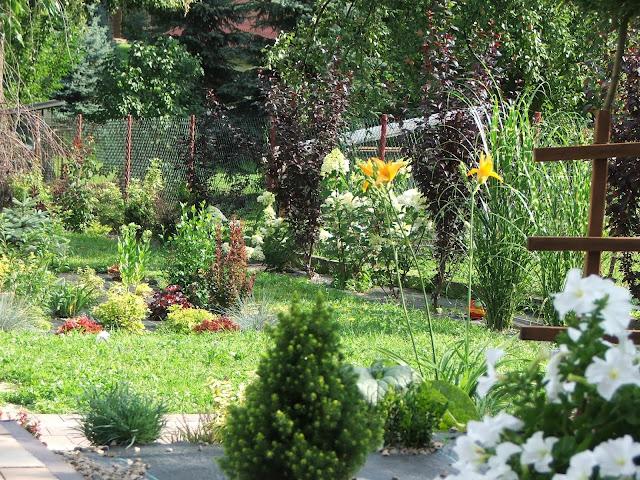 Ogród kwiaty c.d