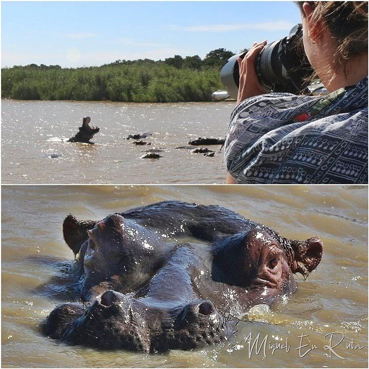 Hipopótamos-Isimangaliso