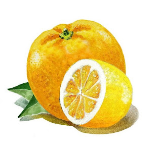 Bestselling Watercolor painting of lemon and orange by the artist Irina Sztukowski
