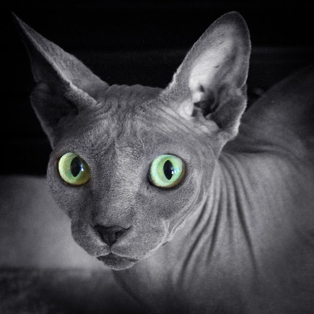 chat-bizarre-gros-yeux