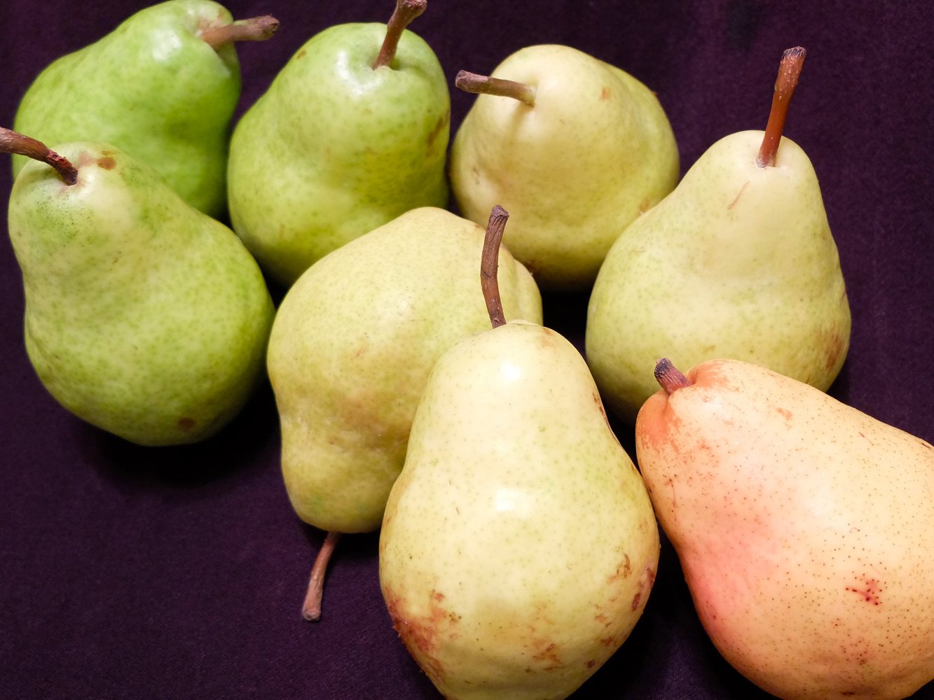 Bartlet pears, in varying stages of ripeness.