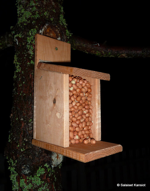 Oravien Ruokinta