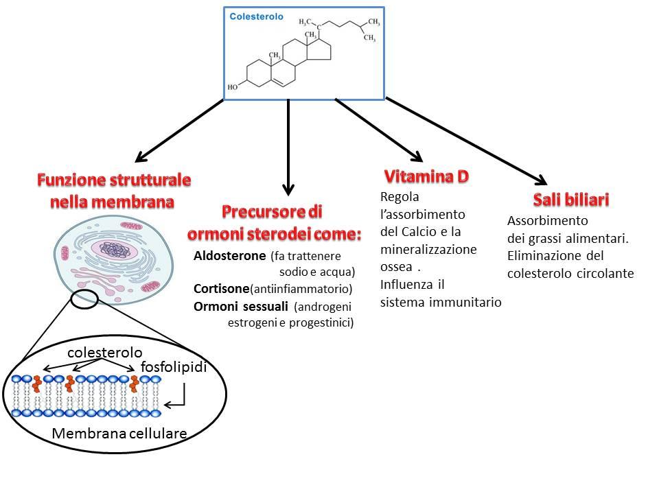 basso colesterolo HDL e disfunzione erettile