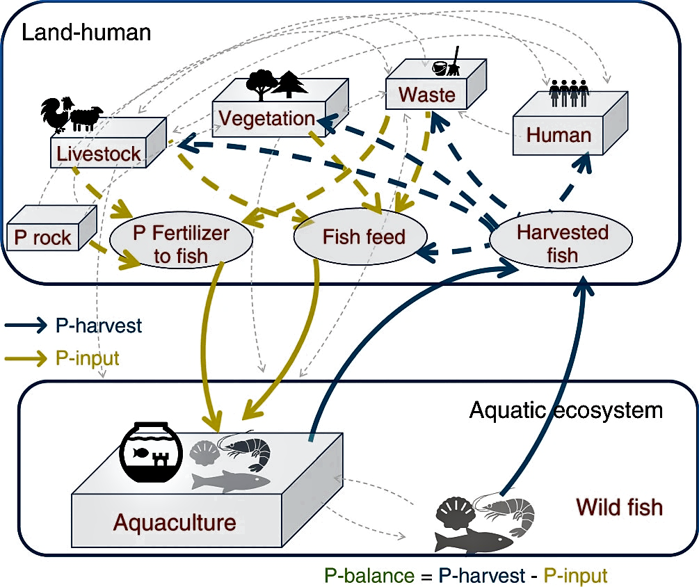 The shift of phosphorus transfers in global fisheries and aquaculture, chart.