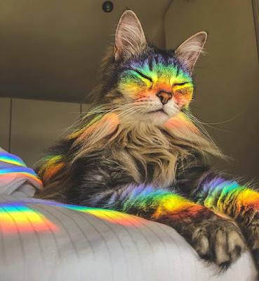 Avatar Mèo cute