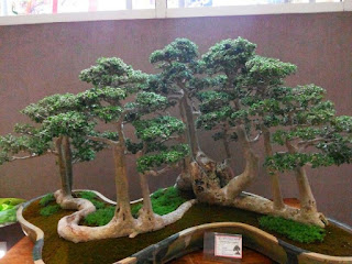 inspiratio make bonsai