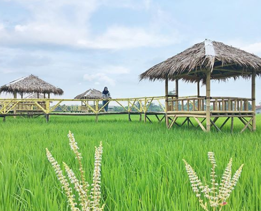 Kampung Wisata Sawah, Wisata Baru di Deli Serdang
