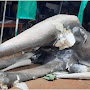 தேர்தல் அலுவலகத்தின் மீது இனந்தெரியாத குழுவொன்றினால் தாக்குதல்