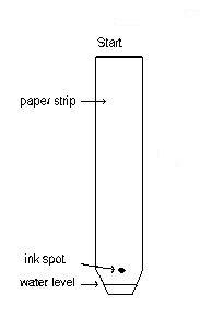 Kertas Kromatografi