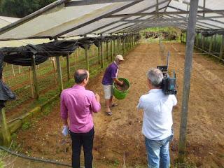 Técnica de compostagem incentivada pelo programa Rio Rural alavanca produção