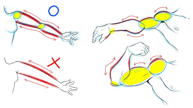 The basic structure of arms