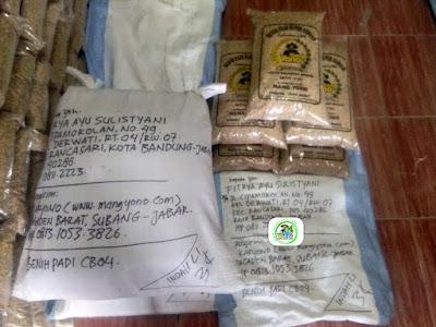 25 kg Benih Padi Pesanan    FITRYA AYU SULISTYANI Bandung, Jabar.   (Sebelum di Packing).