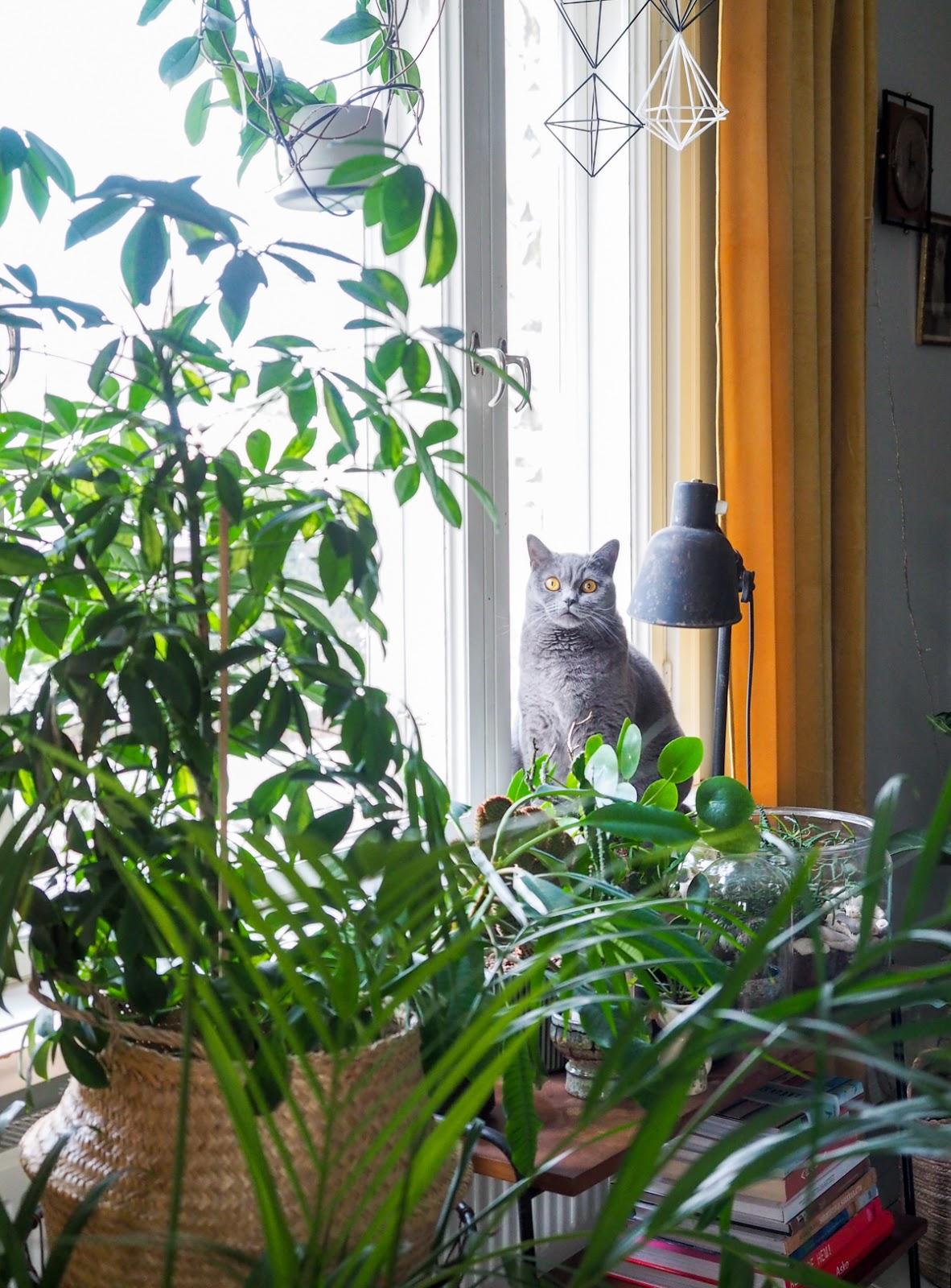 viherkasvien talvihoito