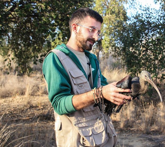 A primeira íbis-preta recuperada e devolvida à Natureza pelo RIAS