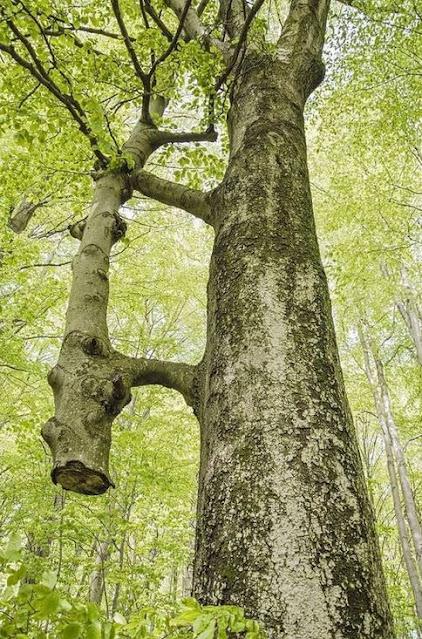 Tree helping tree