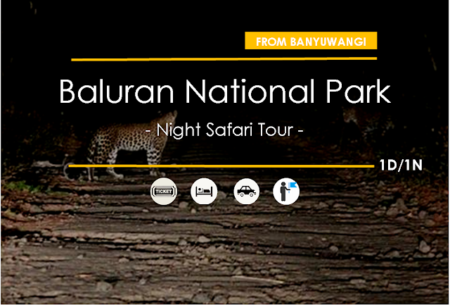 Baluran Wildlife Safari - Night Tour