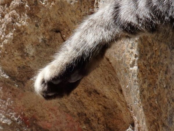 cat paw close-up