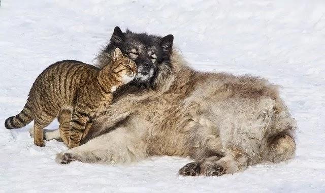 ice land dog and cat love image