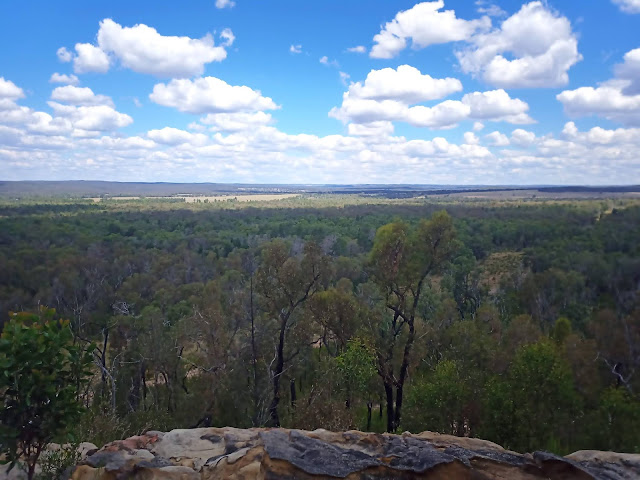 View of Pilliga Forest
