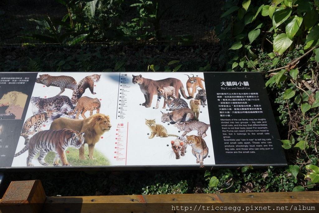 台北動物園(30).jpg