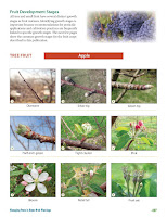 Tree Phenology