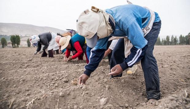 Agrobanco firma acuerdos con 770 organizaciones del agro para facilitar créditos