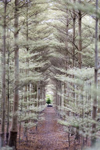穿梭在綠色的聖誕樹隧道也蠻特別又好看的哦,感謝辛苦的柏帆姐