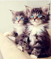 Mis dos gatitos