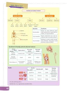 6. Sınıf Fen Bilimleri Ders Kitabı Cevapları Sevgi Yayınları Sayfa 44
