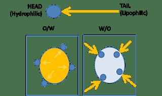 Hydrophilic and lipophilic