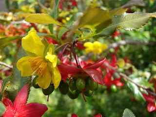 Hoa mai từ quý