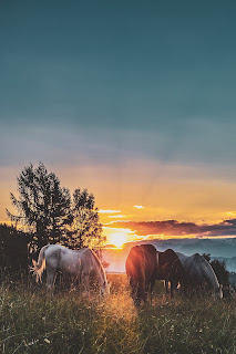 four assorted color horse on grass fields near tall trees 1366913