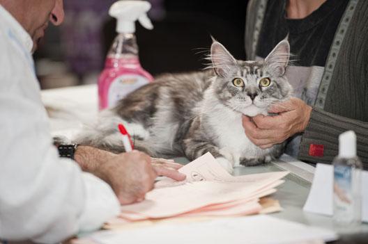 Czy wystawy kotów są potrzebne?