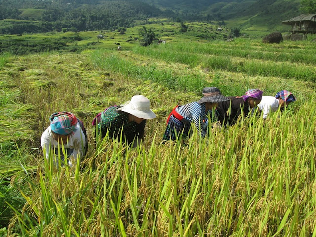 Discover the capital of the Red Dao ethnic group in Vietnam 1