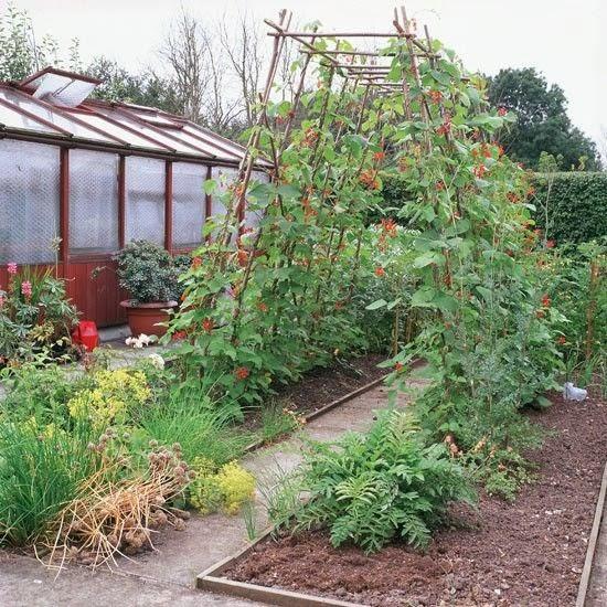 Design Ideas For Vegetable Gardens: Mariondee-designs: Veggie Patch 'garden Arch' Inspiration