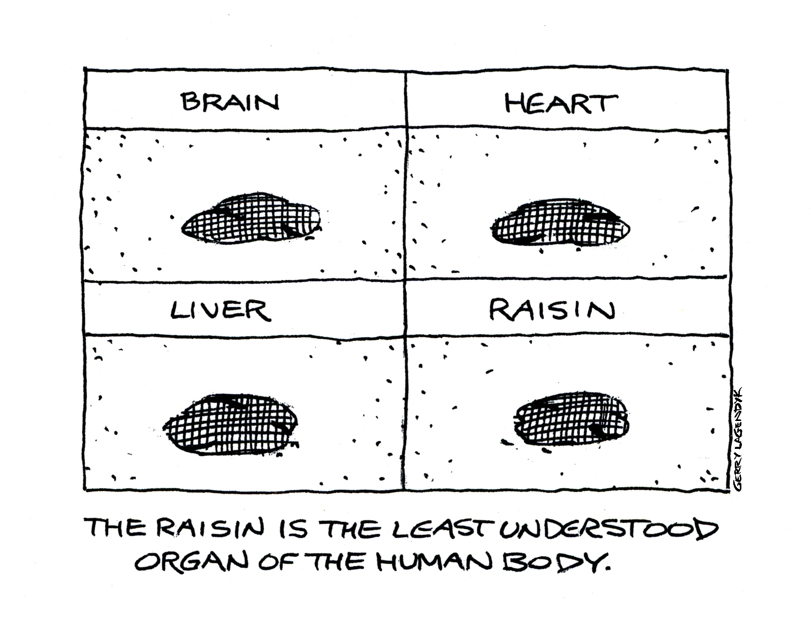 Gerry Lagendyk, raisin, internal organs