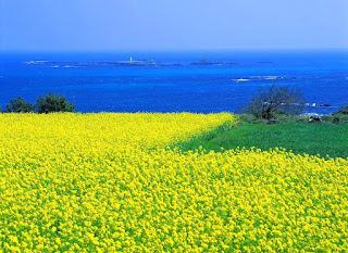 Wisata Korea Selatan - Pulau Jeju