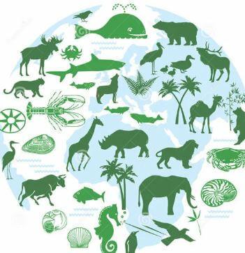 ما هي التهديدات الرئيسية للنظم الإيكولوجية للأراضي الرطبة حول العالم؟