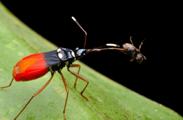 فصيلة من الحشرات