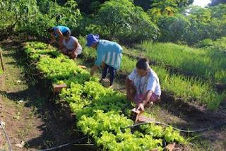 Governo Federal inicia pagamento do Garantia-Safra 2019/2020 em Guanambi; confira o calendário