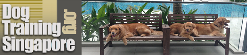 Dog courses in Singapore