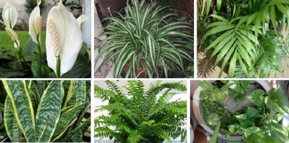 Estas plantas son bombas de oxígeno y ayudan a limpiar el aire de tu hogar