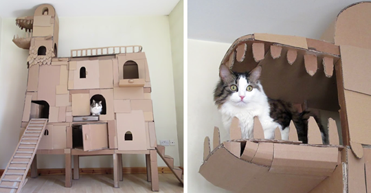 Human Builds A Cardboard Ark For His Cat In Order To Please His Master